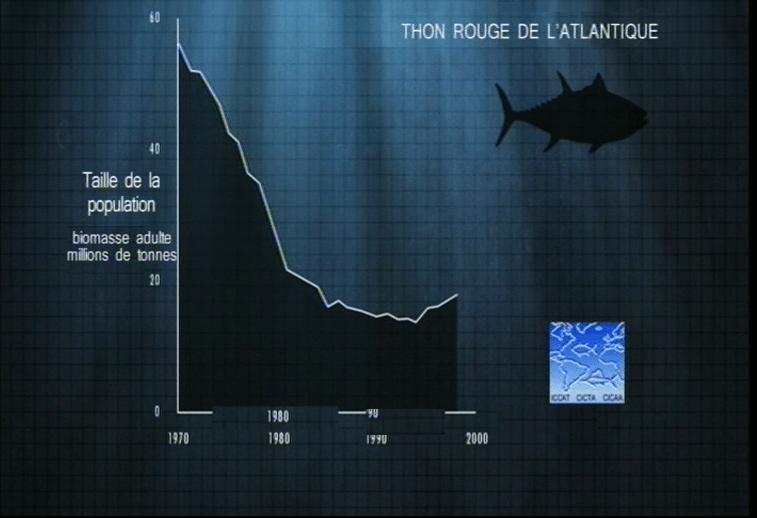 The End of Line - Thon Rouge de l'Atlantique