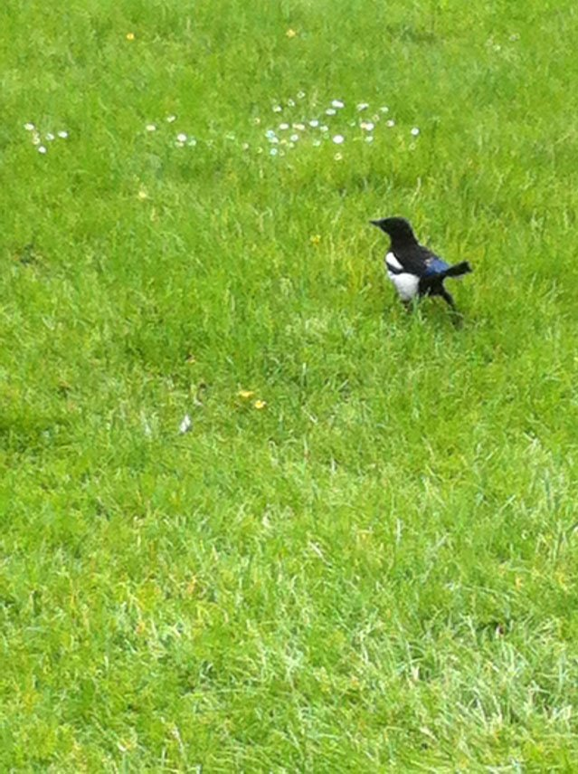 oiseau parisien