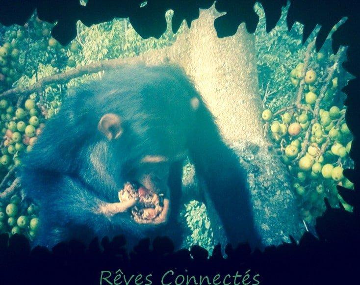Photo de lexposition a la piste des grands singes 2