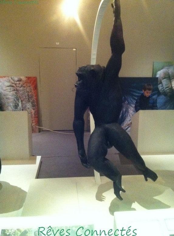 Photo de lexposition a la piste des grands singes 3