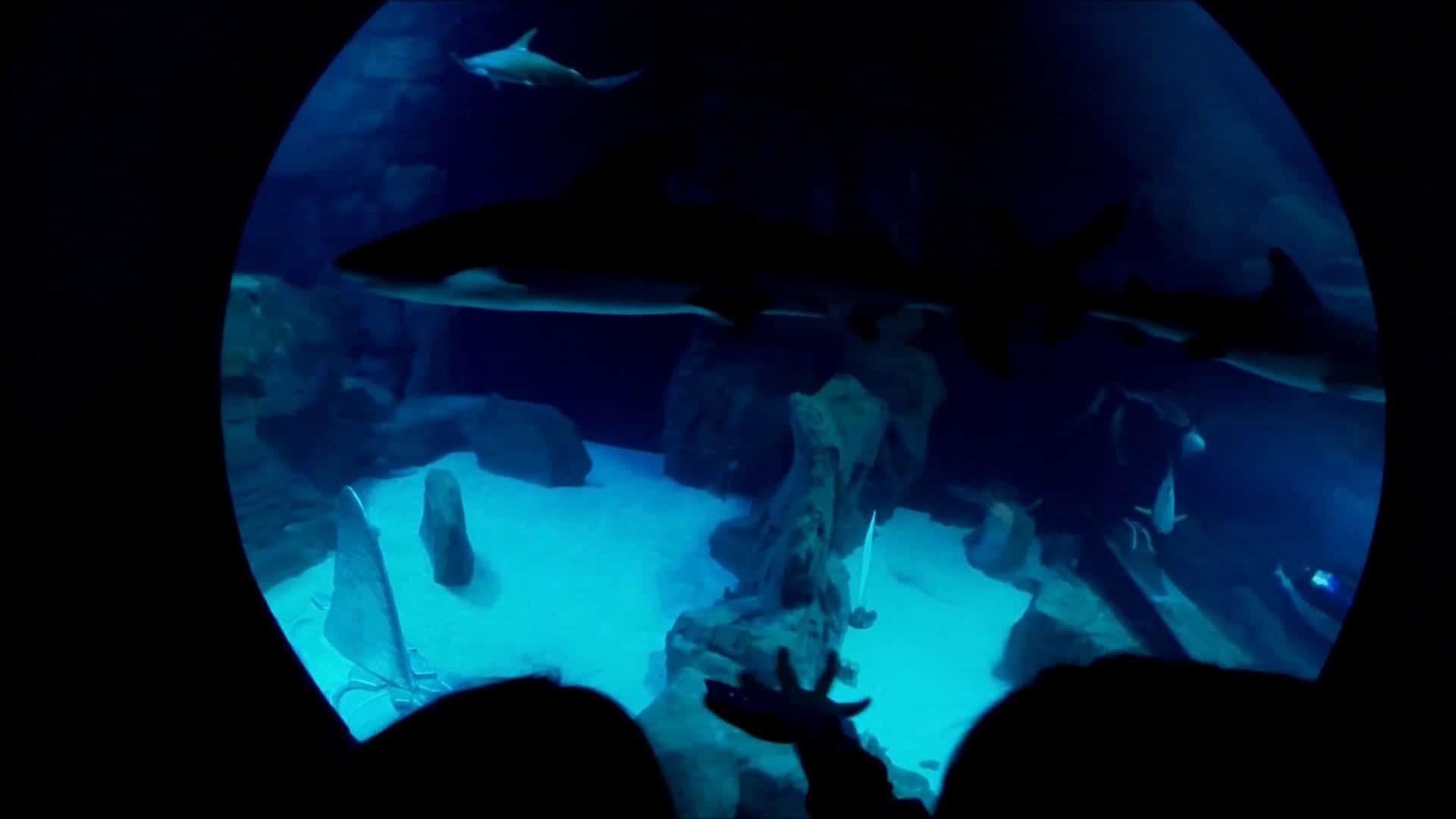 podcast l 39 aquarium de paris aux couleurs rodriguaises. Black Bedroom Furniture Sets. Home Design Ideas