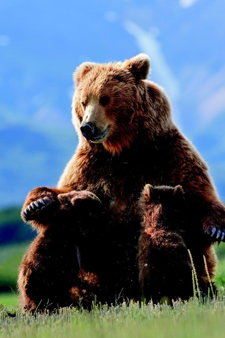Grizzly 8vdhgh49ej1fhp6i