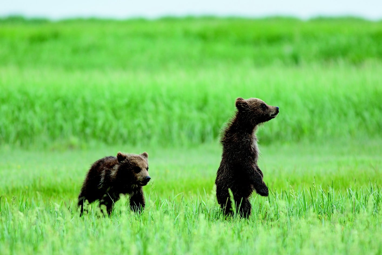 Grizzly ehczmvvrsvk9gy2p