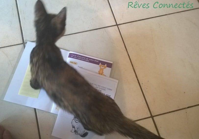 Kaya et son carnet de santé