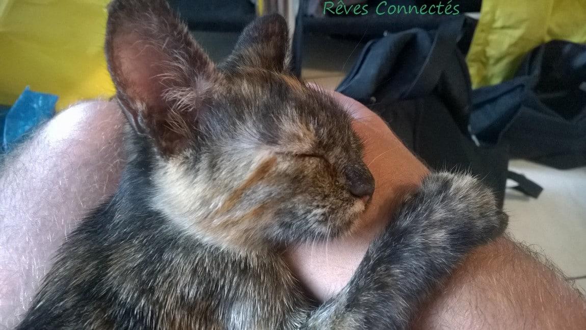Kaya dort sur mes genoux et une main lorsque je travaille sur l'ordinateur.
