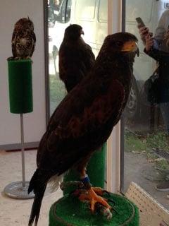 vautour-2