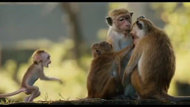 Au royaune des singes vlcsnap-2015-11-01-16h30m48s617