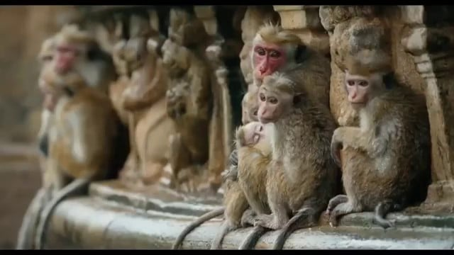 Au royaune des singes vlcsnap-2015-11-01-16h30m56s733