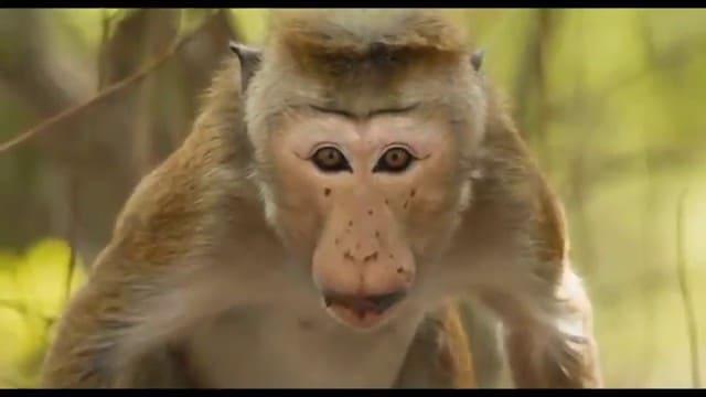 Au royaune des singes vlcsnap-2015-11-01-16h36m31s056