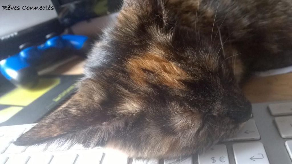 Princesse Kaya peut dormir sur ses deux oreilles (Non pas le clavier !)